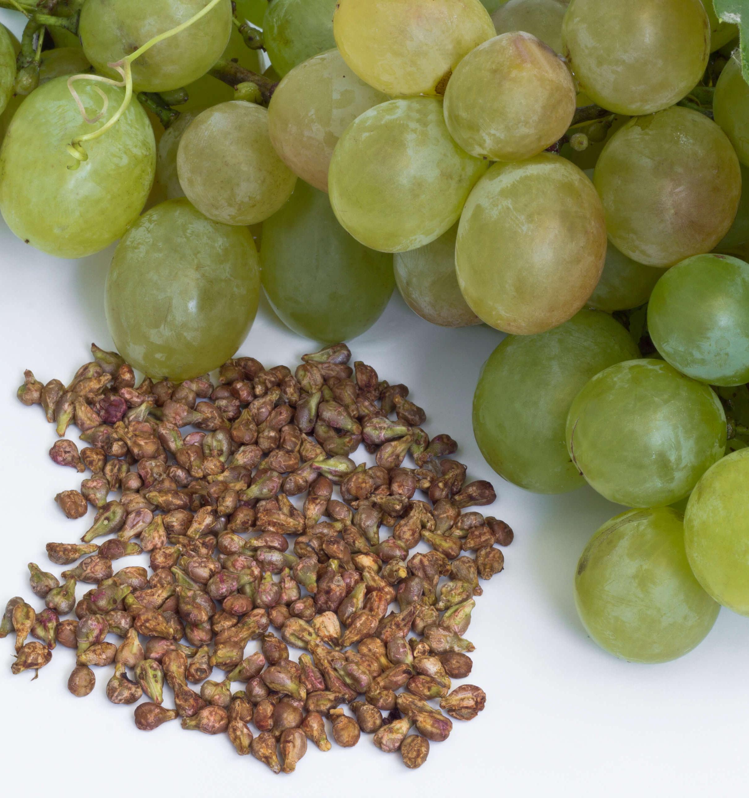 ekstrakt kostochek vinograda 1